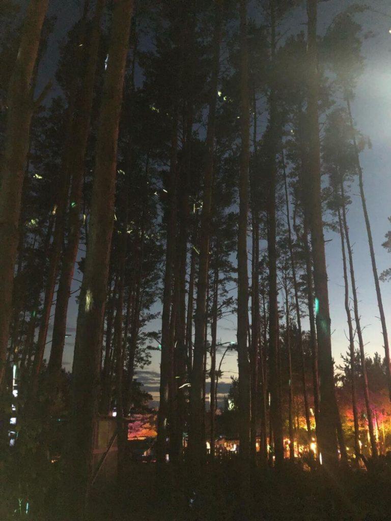 Miejsce, czyli magiczny las w zachodniej Polsce 4